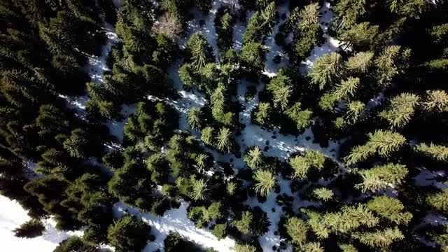 Aerial View Of Pine Trees: Stock Video