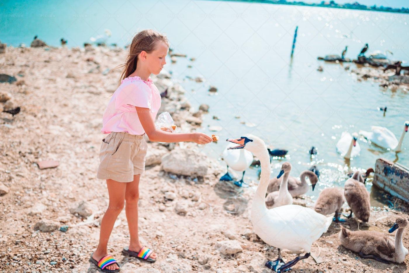 Girl Feeding Swans: Stock Photos