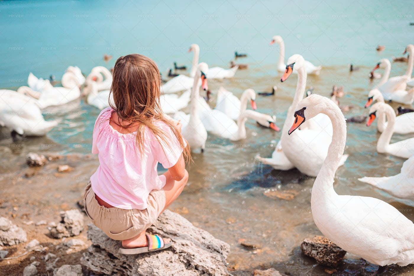 Girl With The Swans: Stock Photos