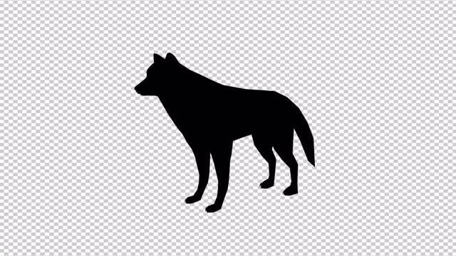 Wolf Animated Cartoon: Stock Motion Graphics