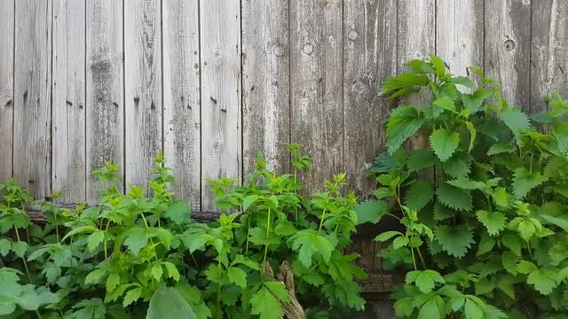 An Old Wooden Fence Background.: Stock Video