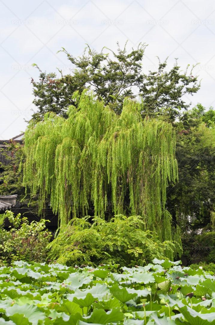 Shens Garden: Stock Photos