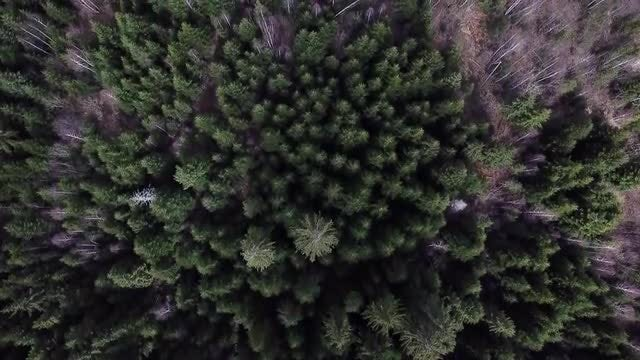 Forest Aerial Top View: Stock Video