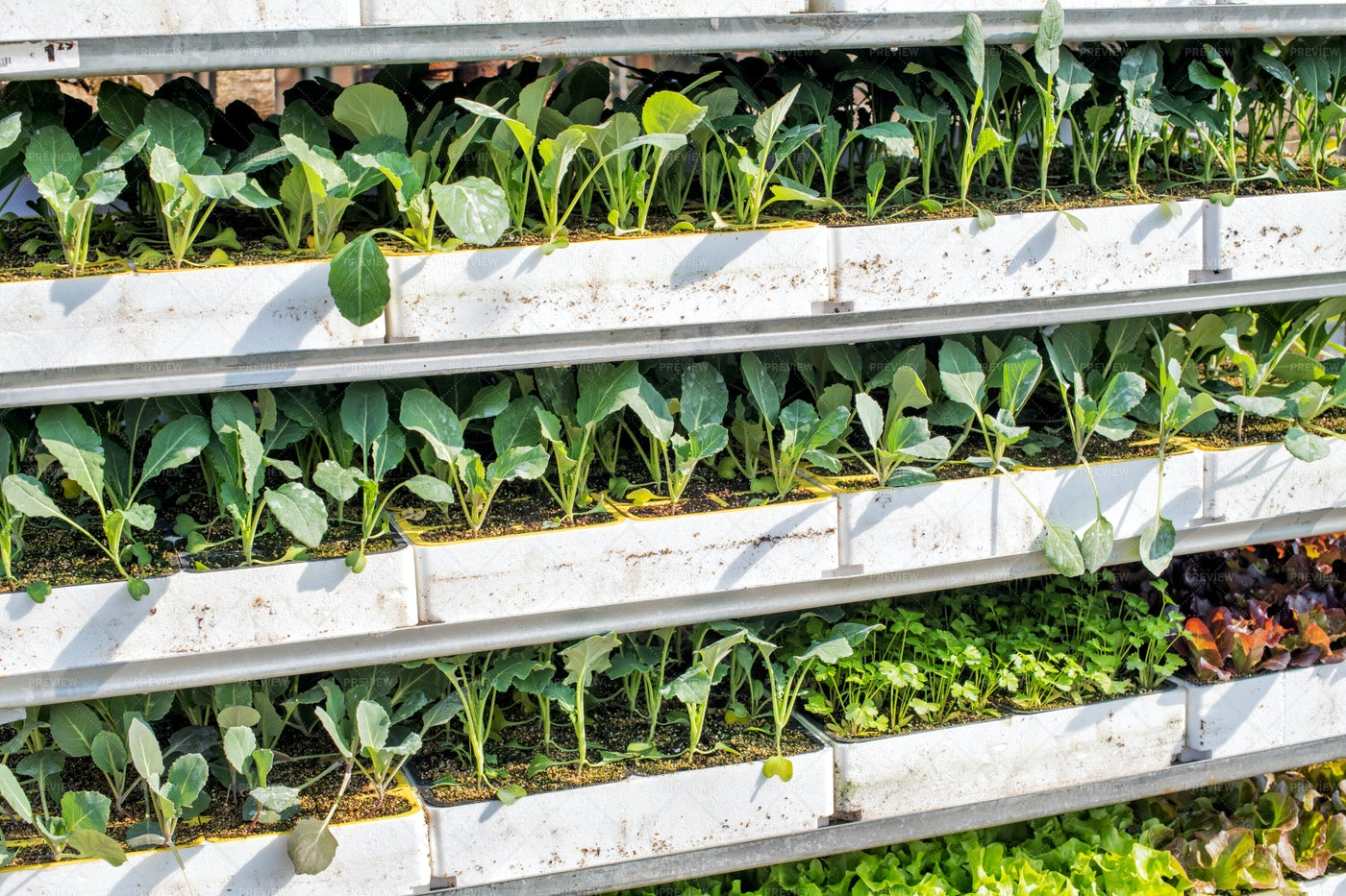 Trays Of Green Seedlings: Stock Photos