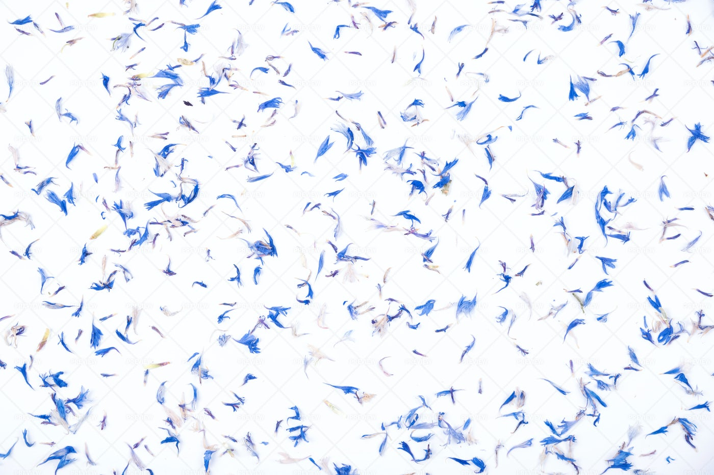 Blue Dried Petal Background: Stock Photos