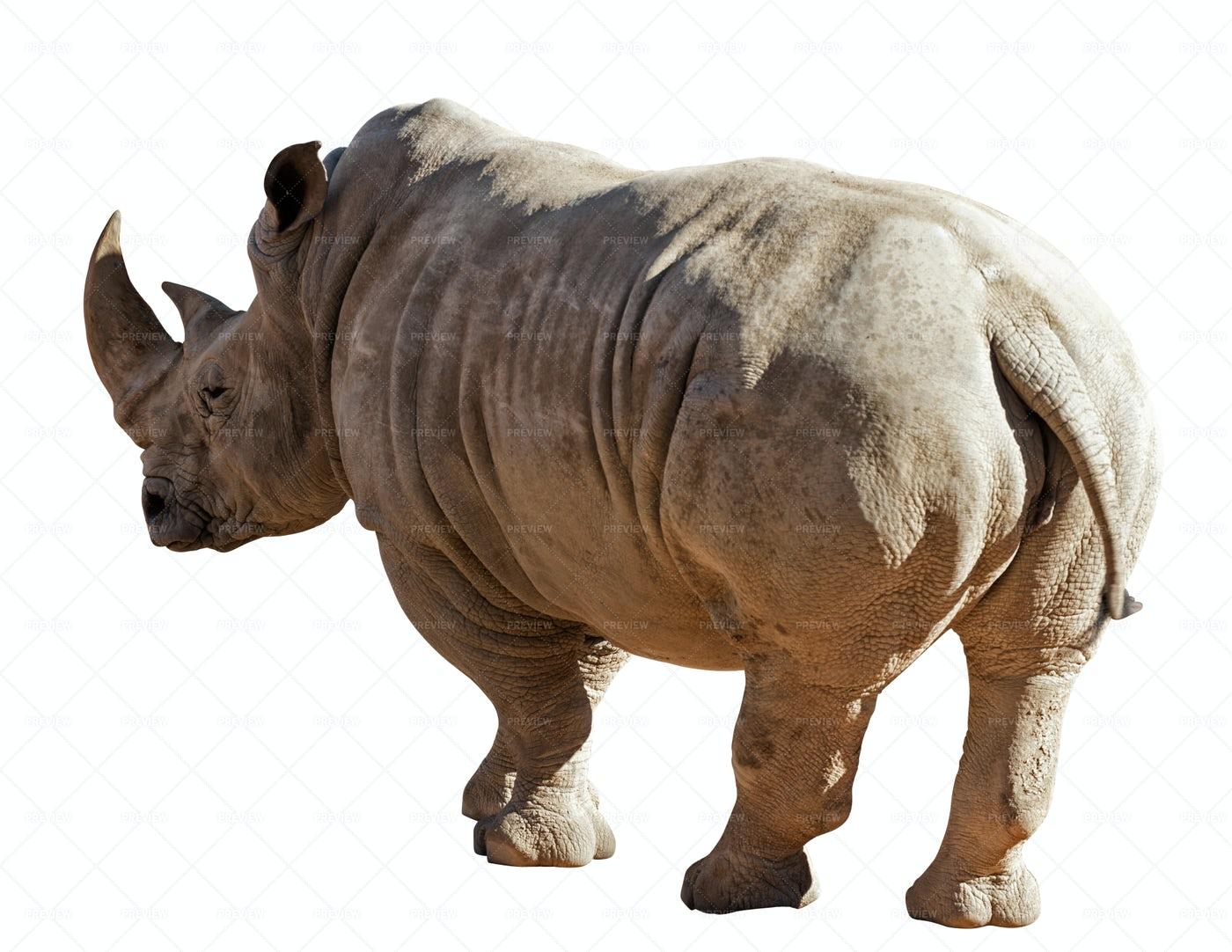Rhinoceros: Stock Photos