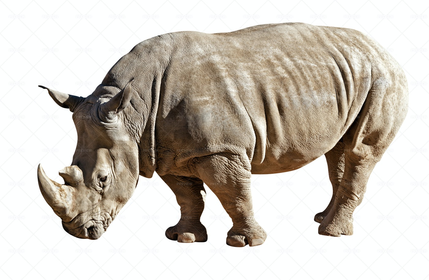 Rhinoceros Isolated On White: Stock Photos