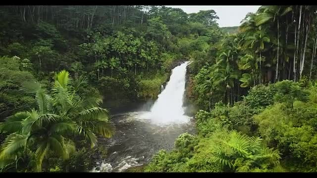 Waterfalls In The Jungle: Stock Video