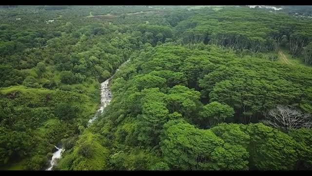 Aerial Shot Of Hawaiian River: Stock Video