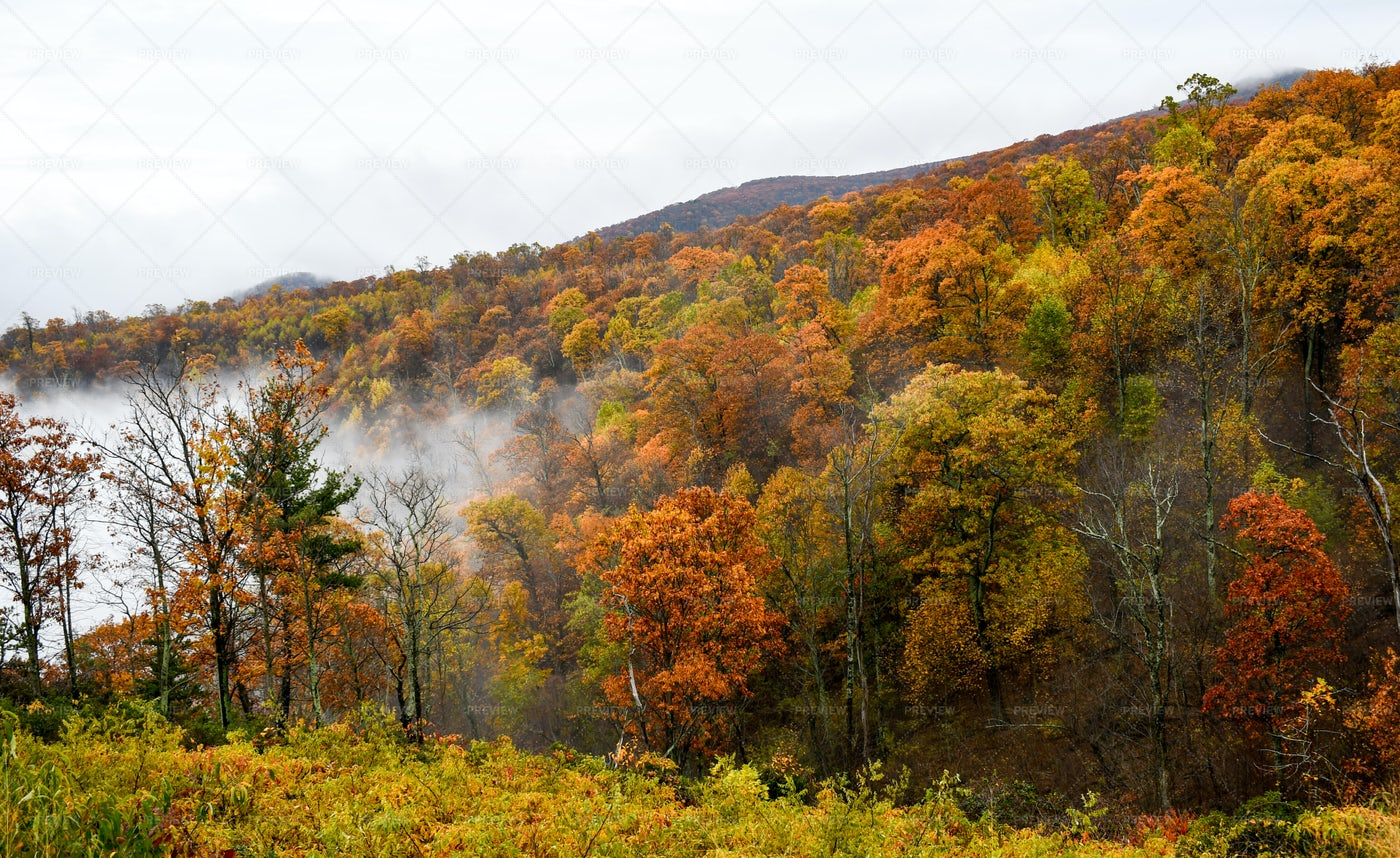 Bright Fall Forest Colors: Stock Photos