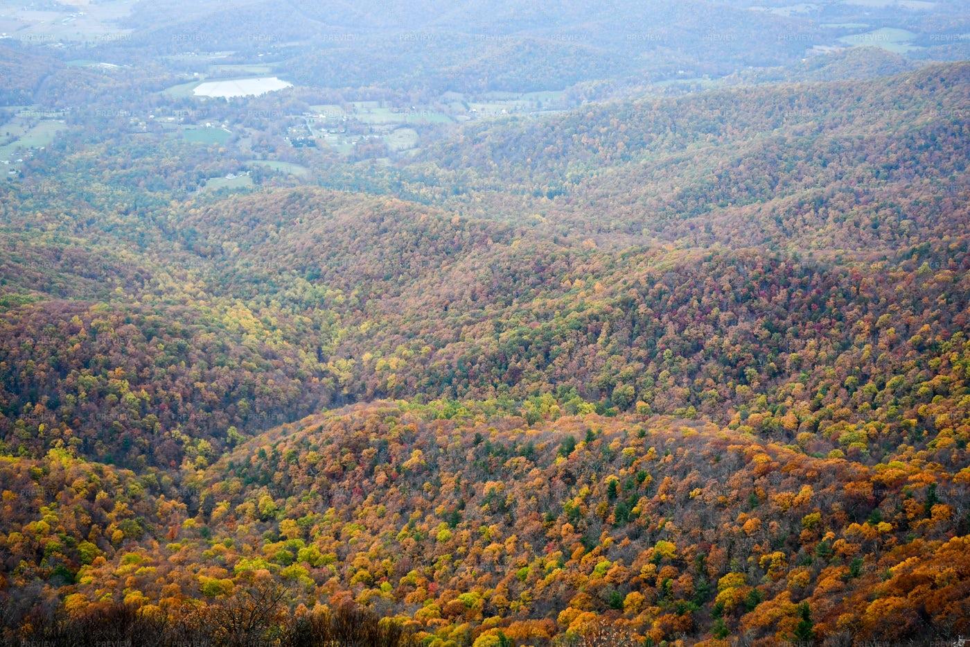 Mountain Forest Aerial: Stock Photos