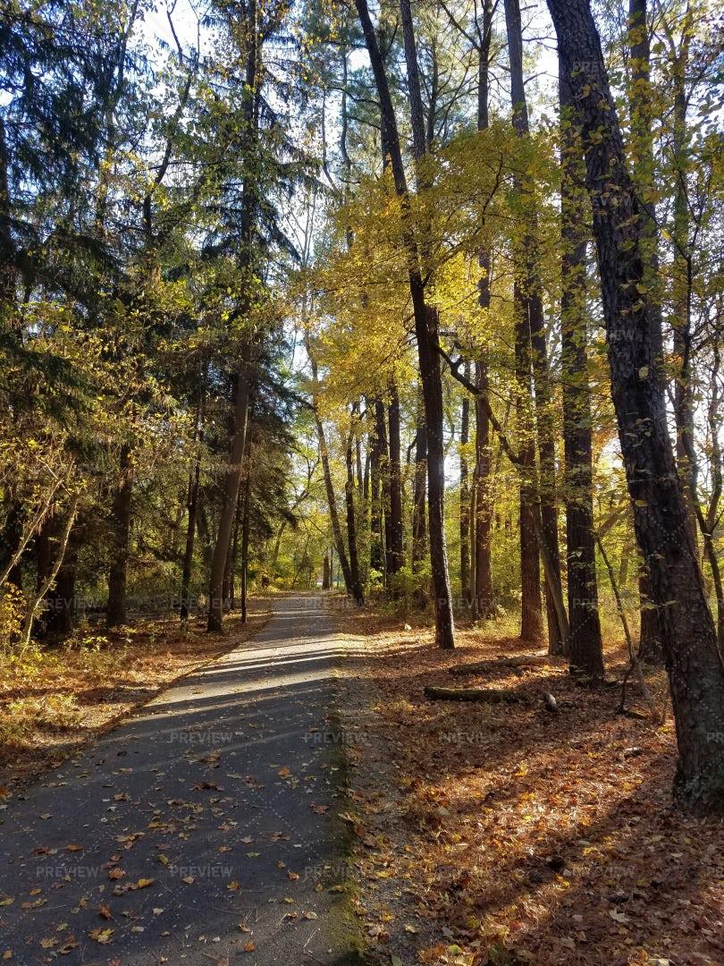 Tall Autumn Trees: Stock Photos