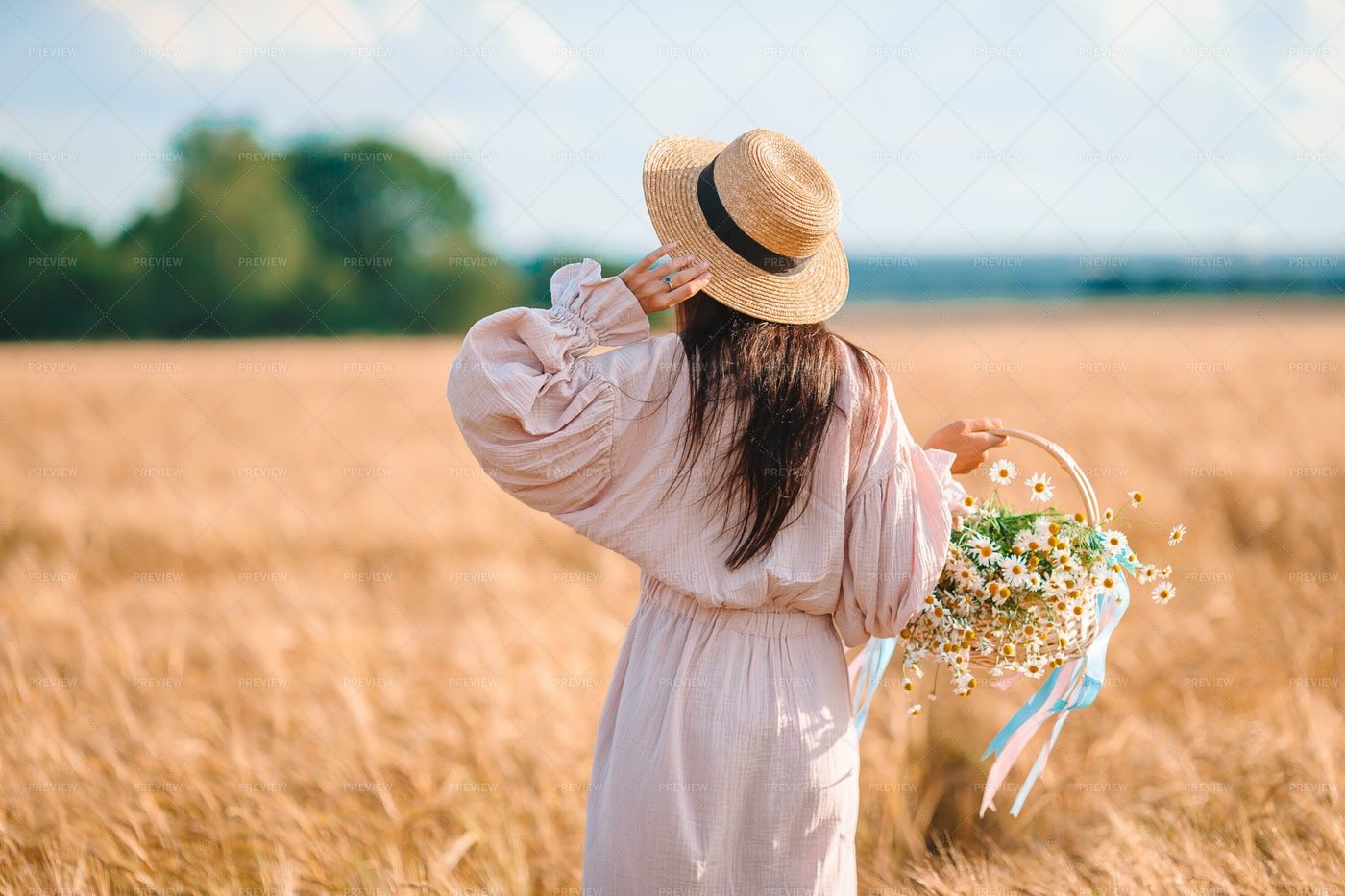 In The Wheat Field With Chamomiles: Stock Photos