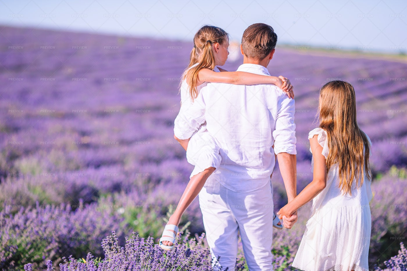 Walking Through Lavender: Stock Photos
