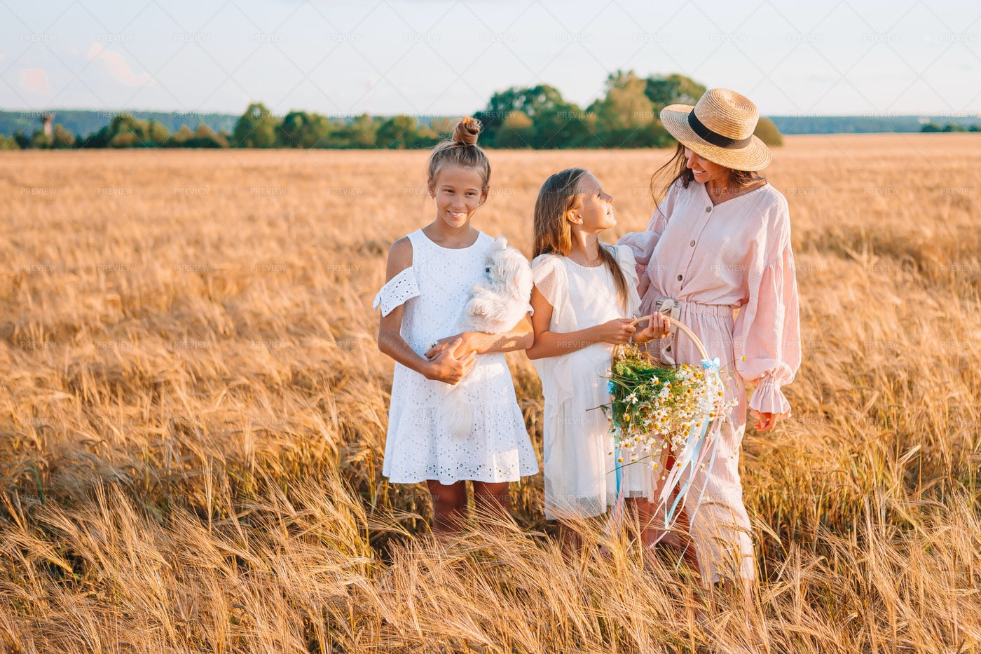Family In The Wheat Field: Stock Photos