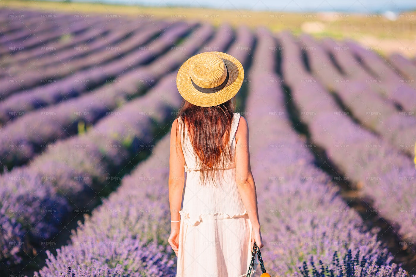 Overlooking The Lavender: Stock Photos