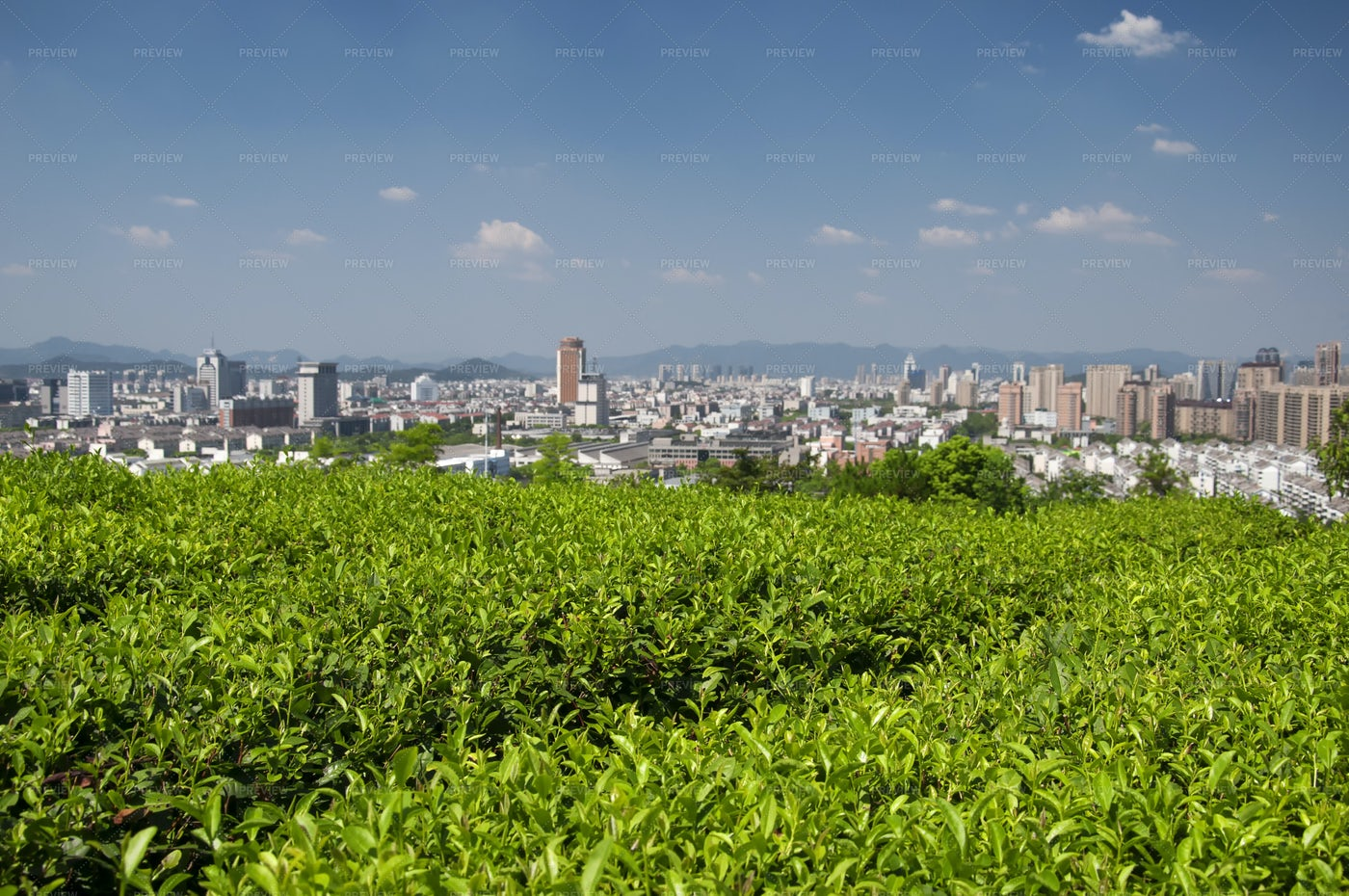 Green Tea Field Atop A Hill: Stock Photos