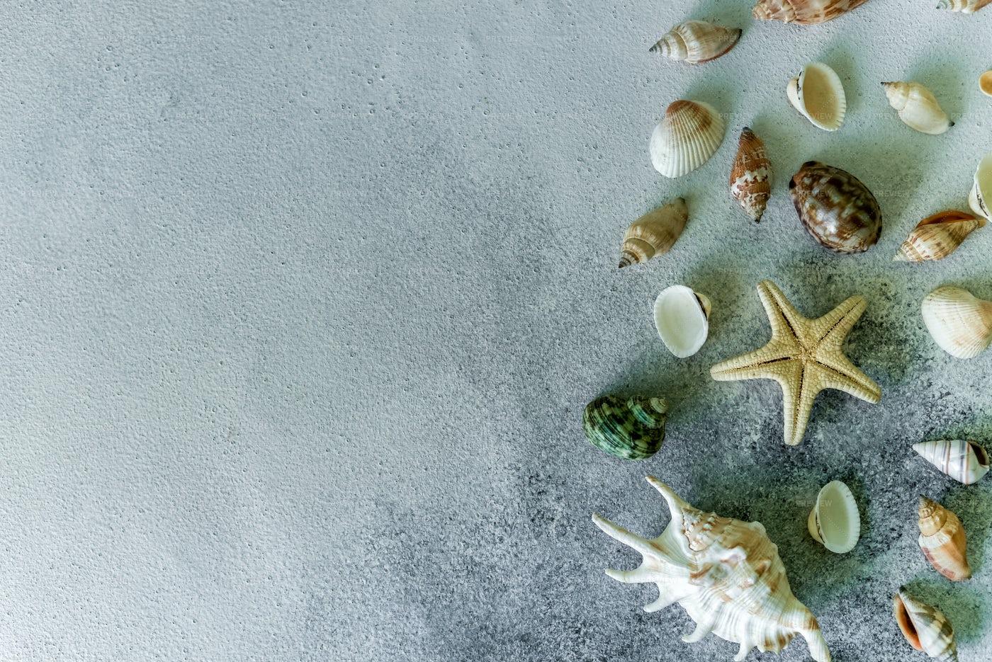 Seashells Background: Stock Photos