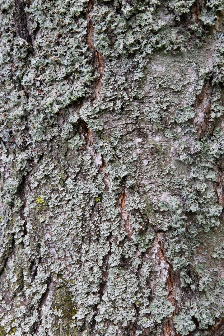 Moss On Tree Bark Close-Up: Stock Photos