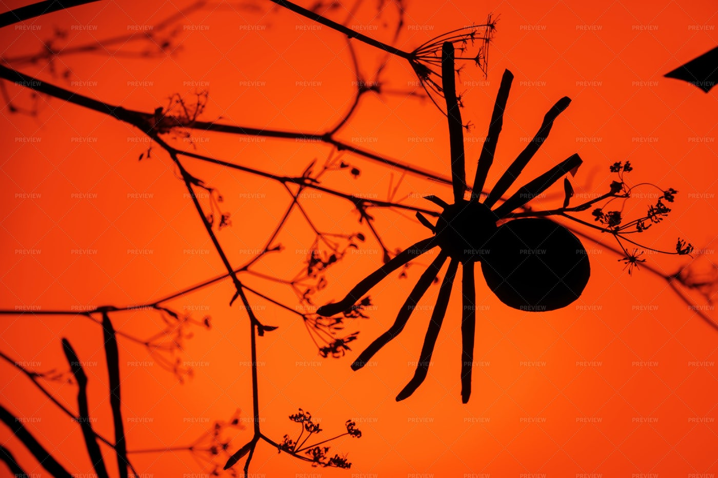 Halloween Paper Spider And Branches: Stock Photos