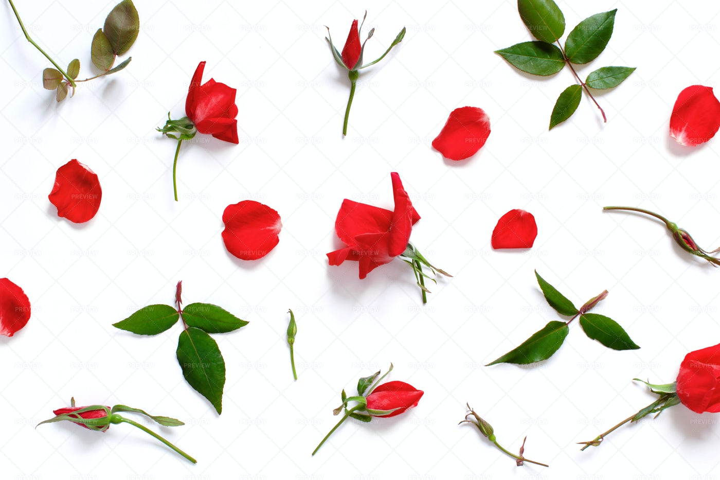 Rose Petals On A White Background: Stock Photos