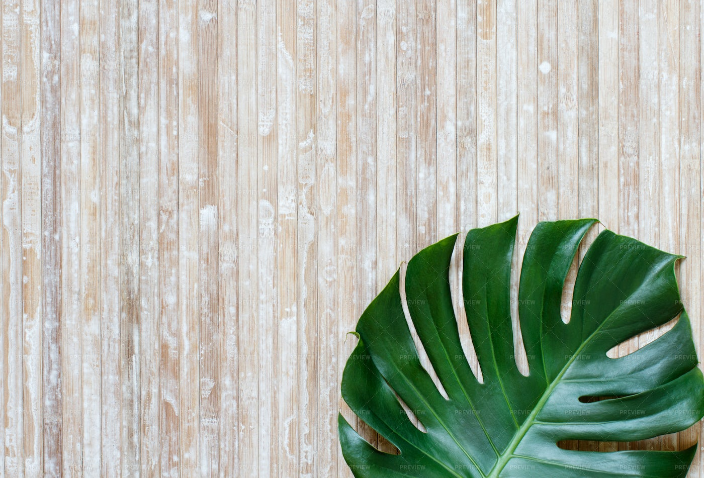 Tropical Leaf Background: Stock Photos