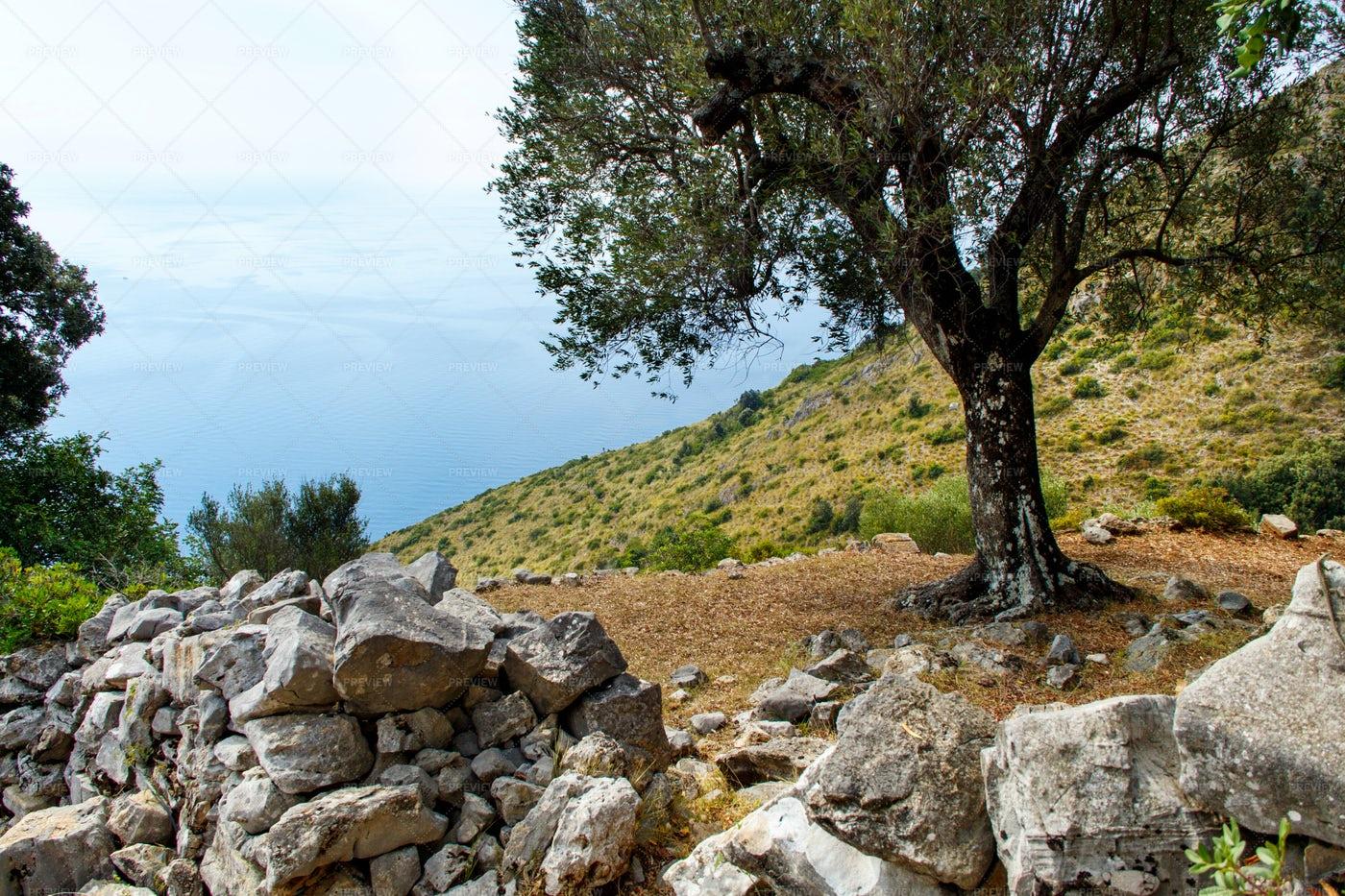 Hiking Trail, Costa Di Masseta, Italy: Stock Photos