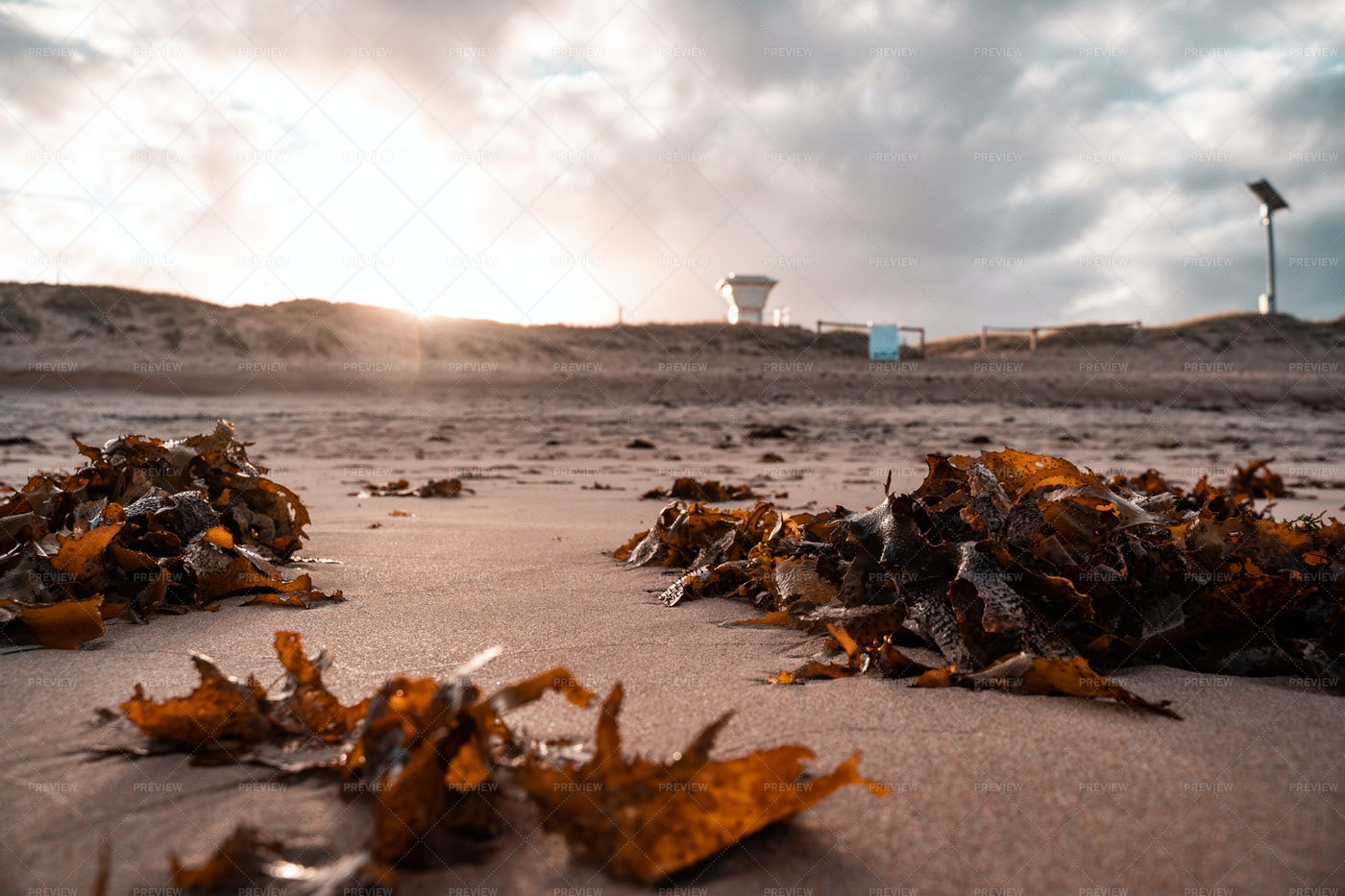 Seaweed: Stock Photos