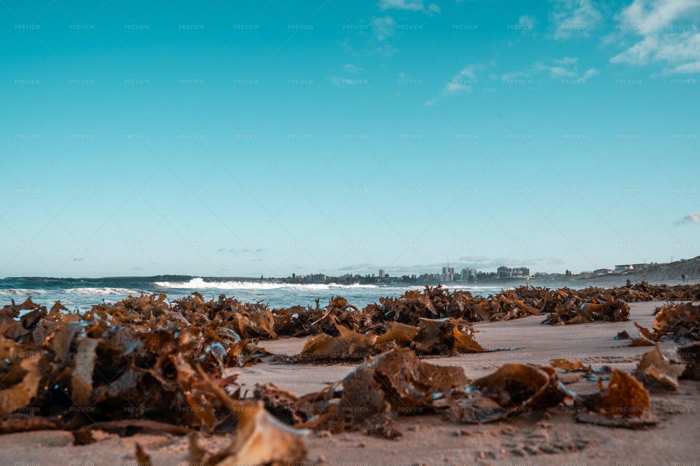 Seaweed On The Beach: Stock Photos