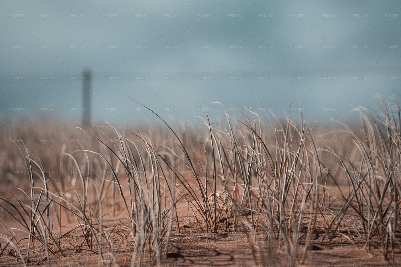 Dry Grass: Stock Photos