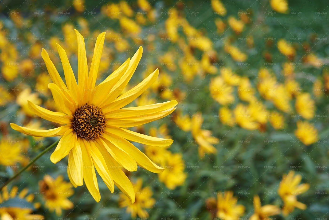 Yellow Flower: Stock Photos