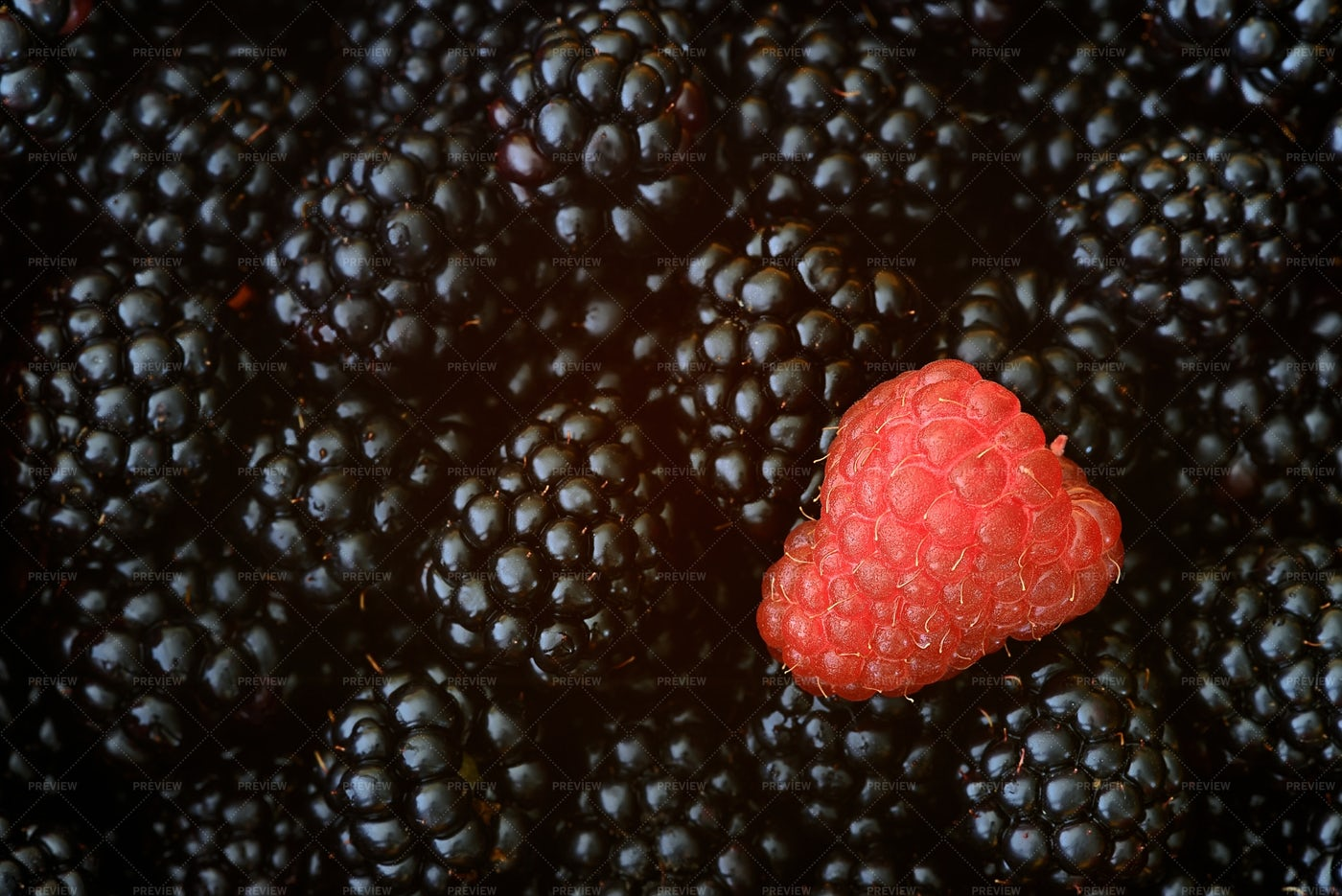 Raspberry Amongst Blackberries: Stock Photos