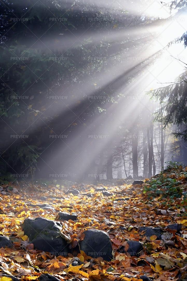 Sunlight: Stock Photos