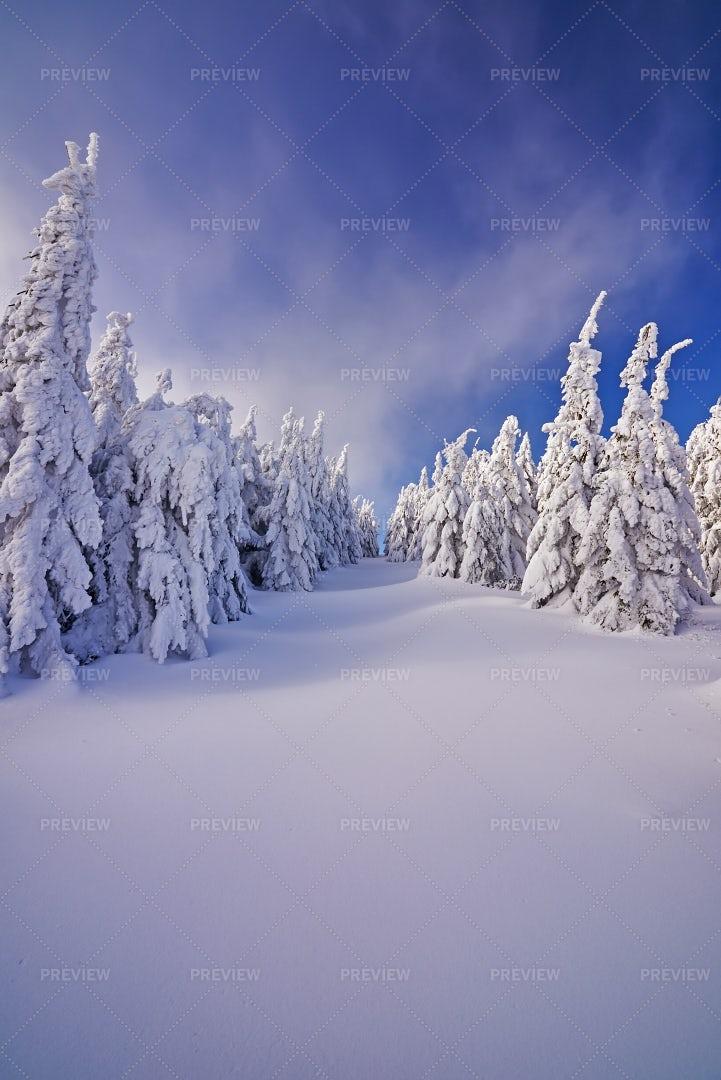 Winter Landscape: Stock Photos