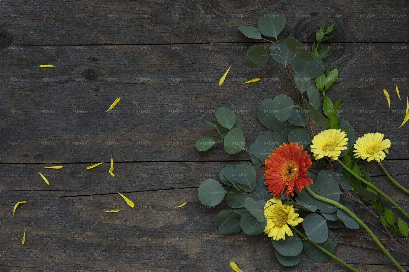 Gerbera Flowers: Stock Photos