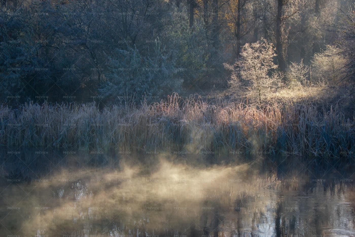 Cold Autumn Morning: Stock Photos
