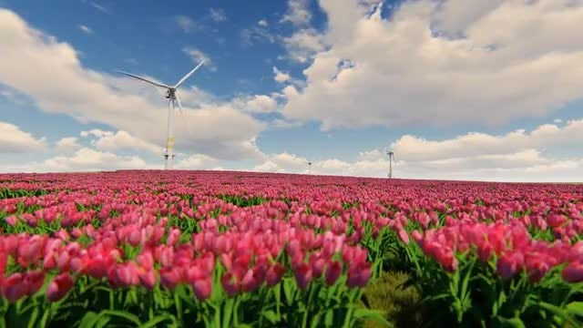 Windmills And Field Of Tulip Flowers: Stock Motion Graphics