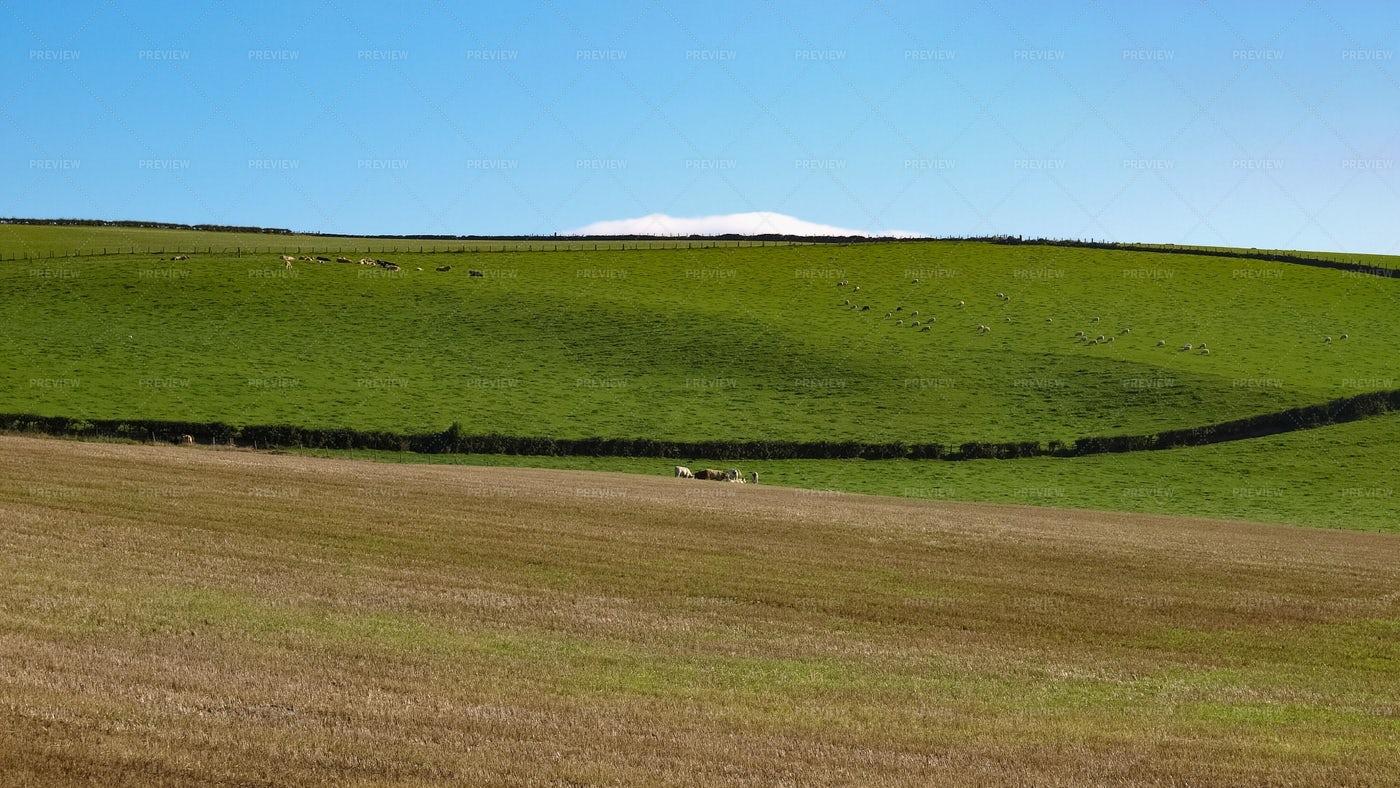 Hills, Grass And Blue Sky: Stock Photos