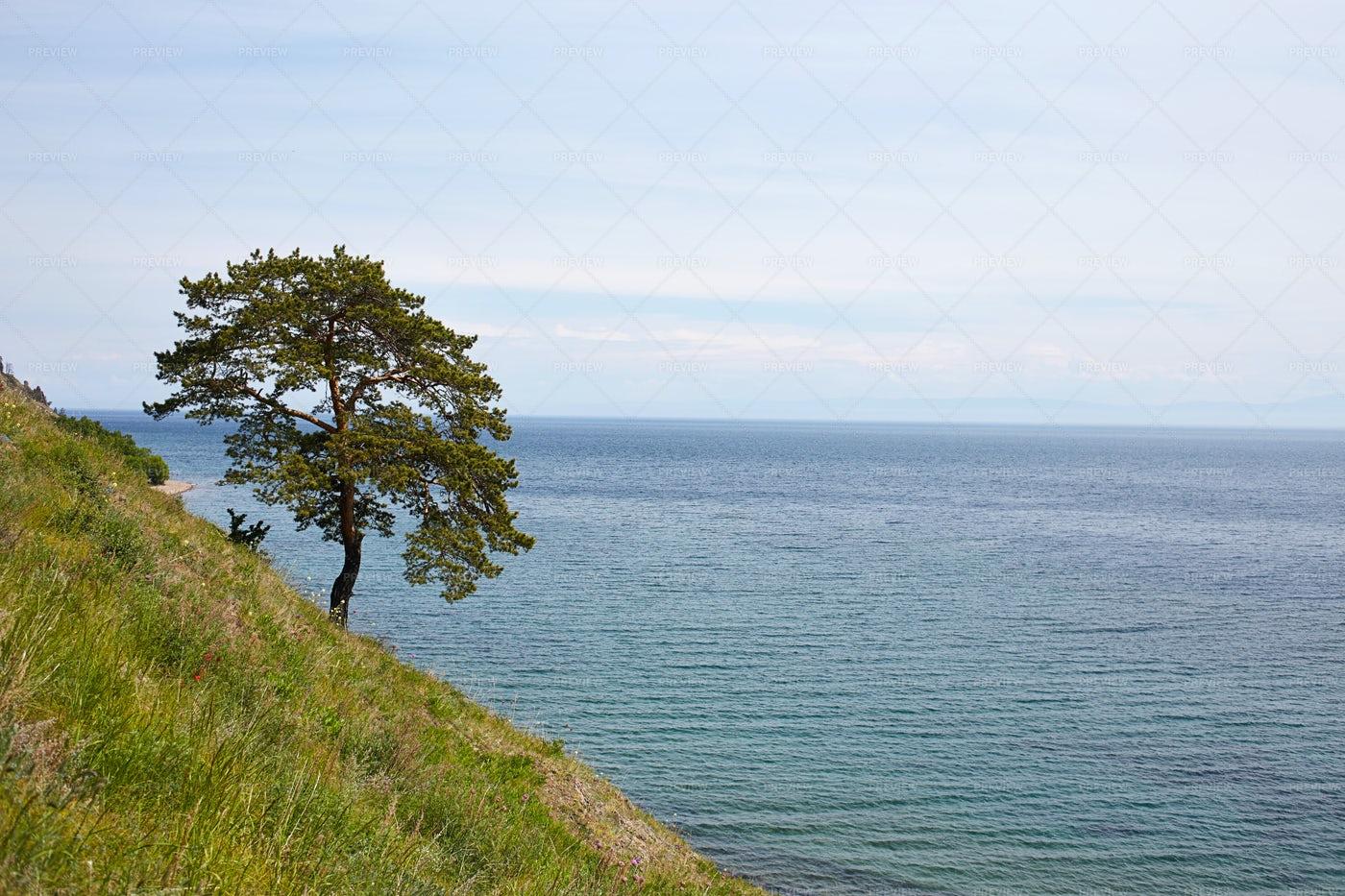 A Tree Overlooks Lake Baikal: Stock Photos