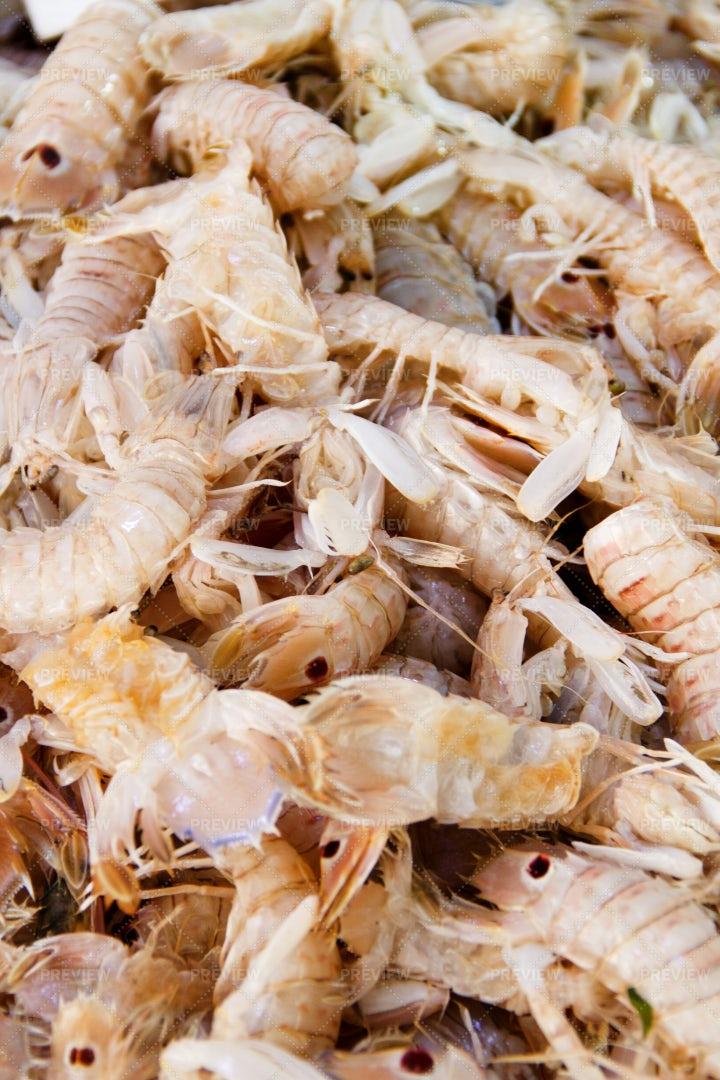 Raw Sea Cicadas: Stock Photos