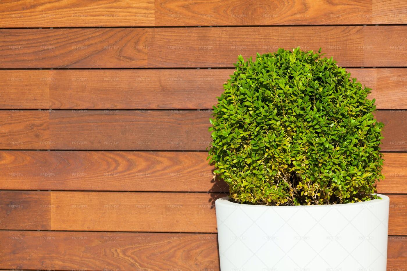 Green Bush: Stock Photos