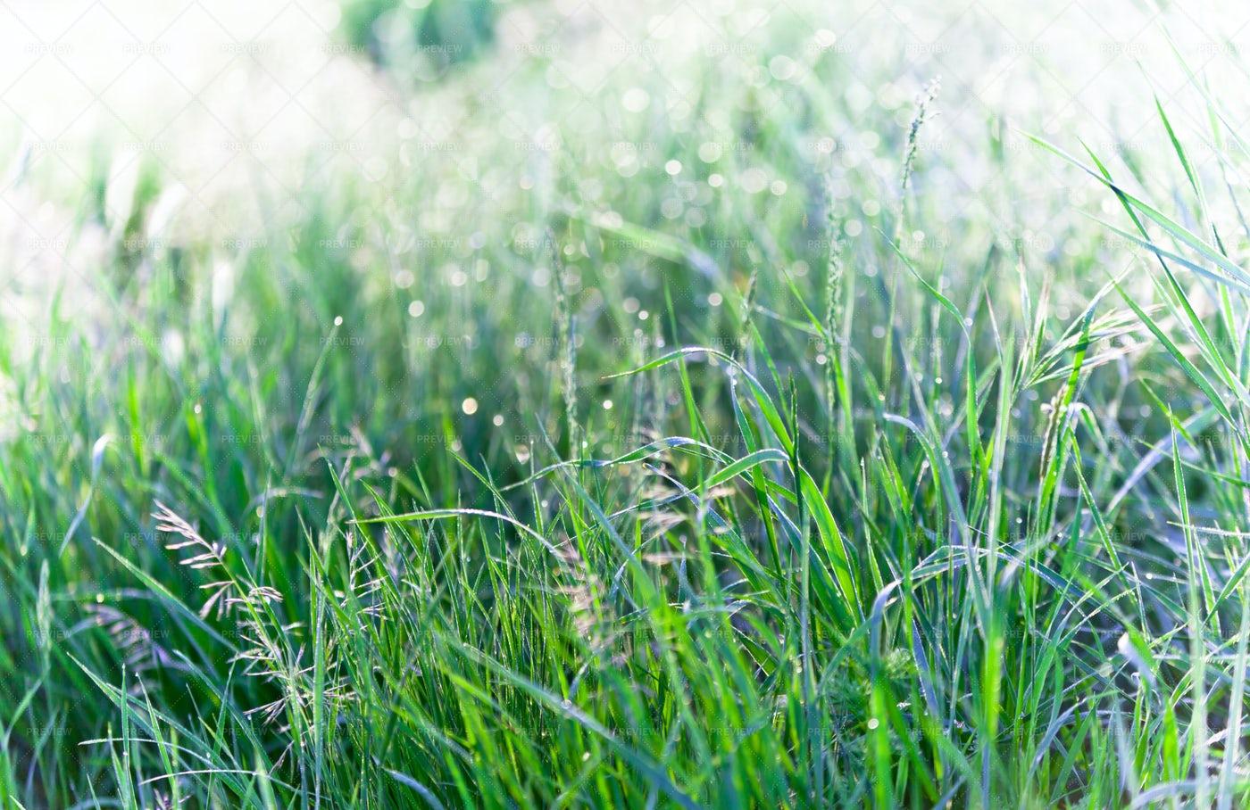 Green Grass: Stock Photos