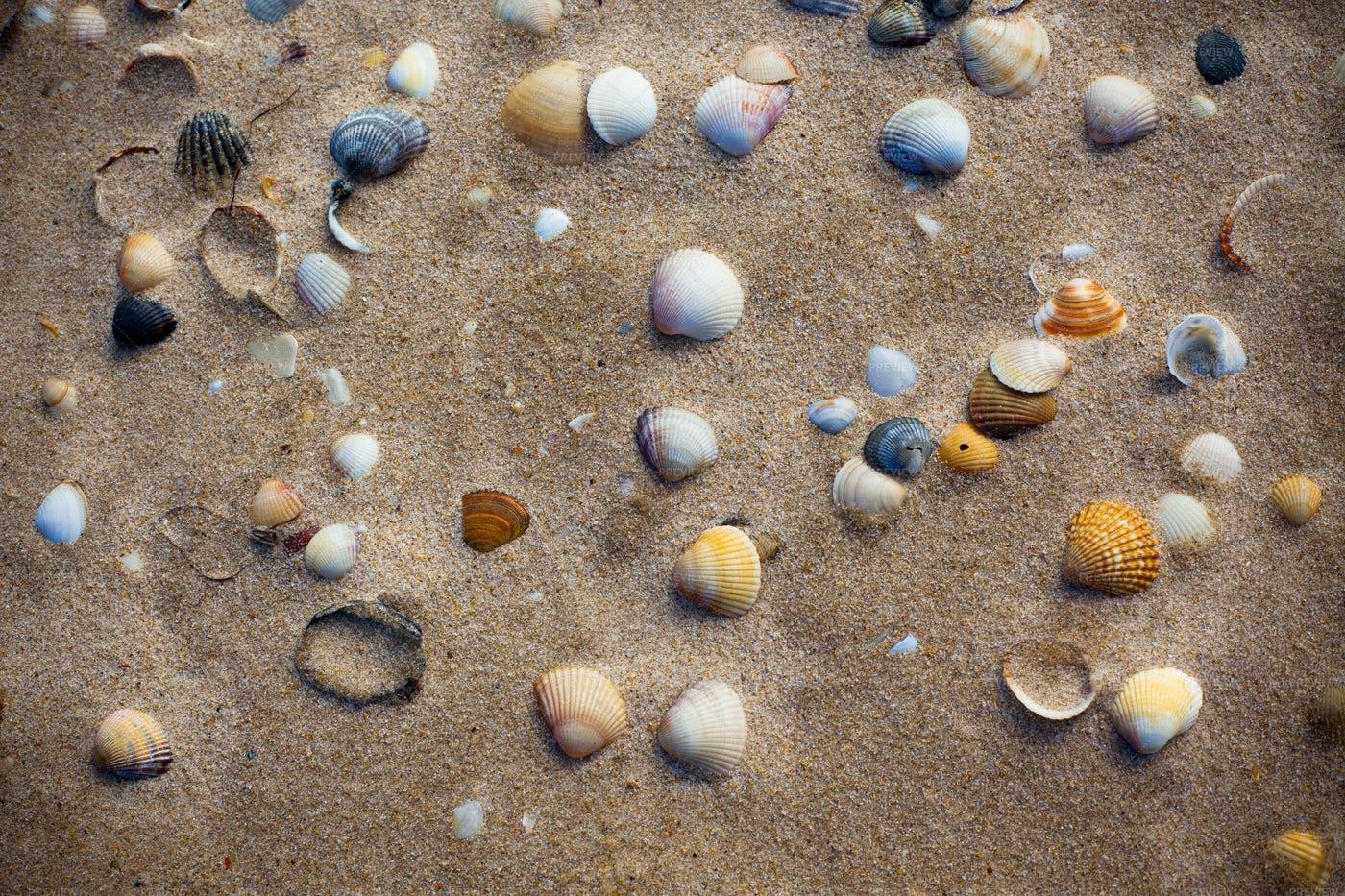 Beach Sand With Seashells: Stock Photos