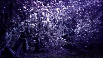 Purple Mystic Garden With Flowers: Stock Footage