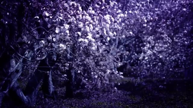 Purple Mystic Garden With Flowers: Stock Video