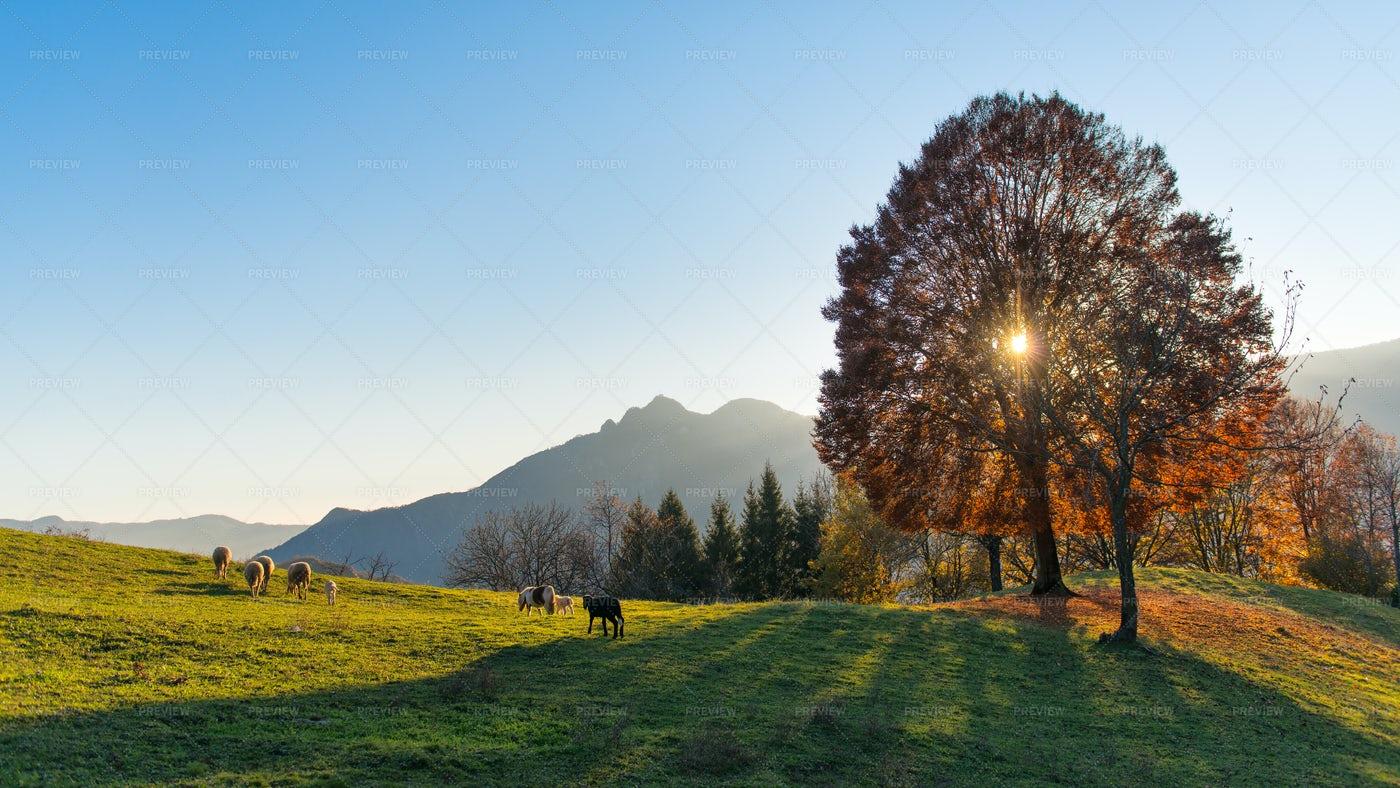 Autumn Mountain Pasture: Stock Photos