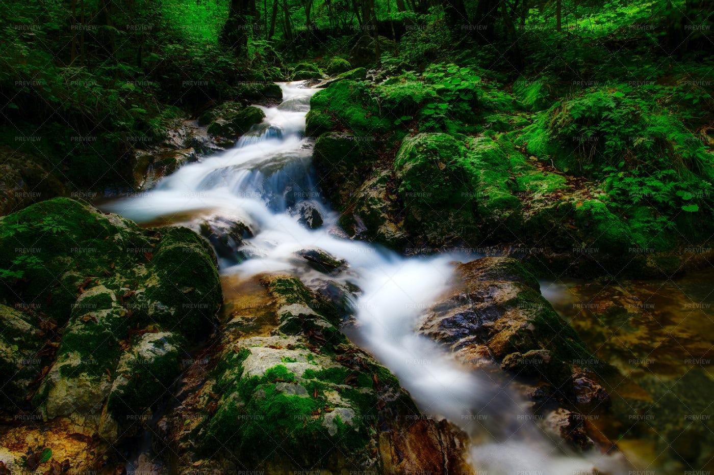 Forest Stream Long Exposure: Stock Photos