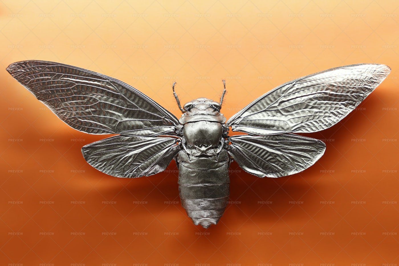 Painted Dried Moth: Stock Photos
