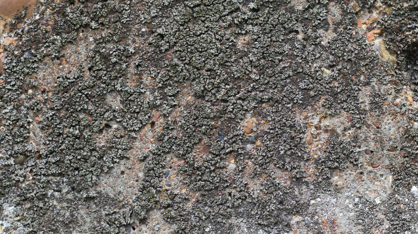 Fungus On Concrete: Stock Photos