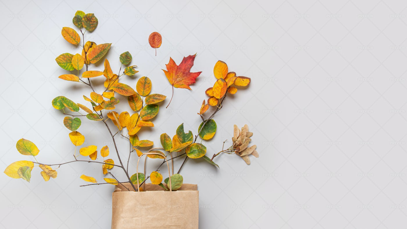 Bag Of Fall Leaves: Stock Photos